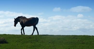 SunnyBrook Meadows Therapeutic Riding